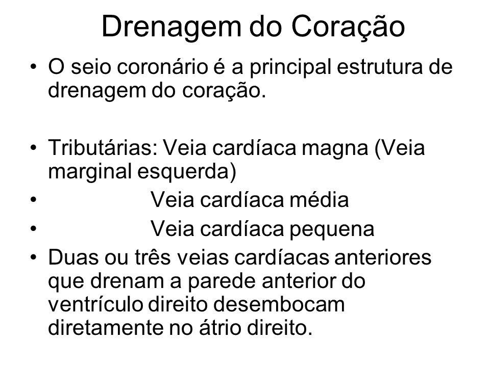 Drenagem do Coração O seio coronário é a principal estrutura de drenagem do coração. Tributárias: Veia cardíaca magna (Veia marginal esquerda) Veia ca