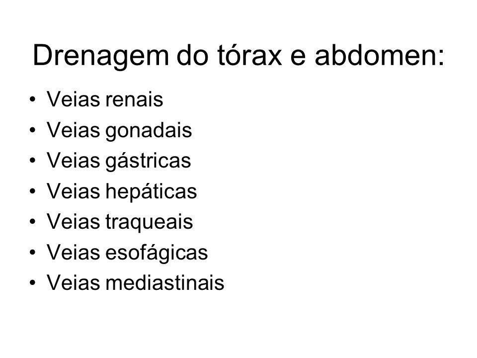 Drenagem do tórax e abdomen: Veias renais Veias gonadais Veias gástricas Veias hepáticas Veias traqueais Veias esofágicas Veias mediastinais