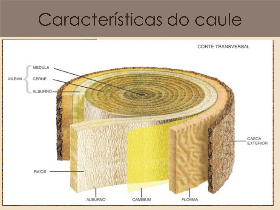 Composição Básica Celulose: Polímero com alta resistência a tração.