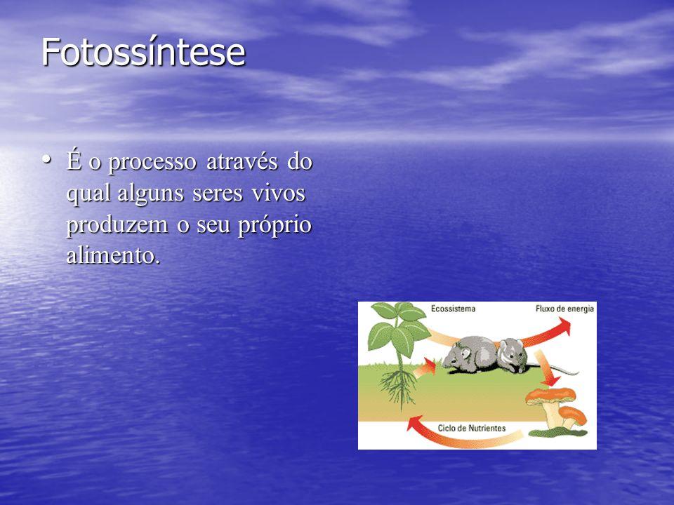 Fotossíntese É o processo através do qual alguns seres vivos produzem o seu próprio alimento. É o processo através do qual alguns seres vivos produzem