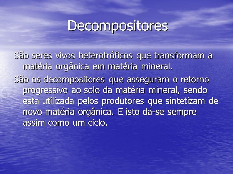 Decompositores Decompositores São seres vivos heterotróficos que transformam a matéria orgânica em matéria mineral. São os decompositores que assegura