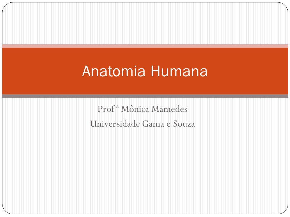 Prof ª Mônica Mamedes Universidade Gama e Souza Anatomia Humana