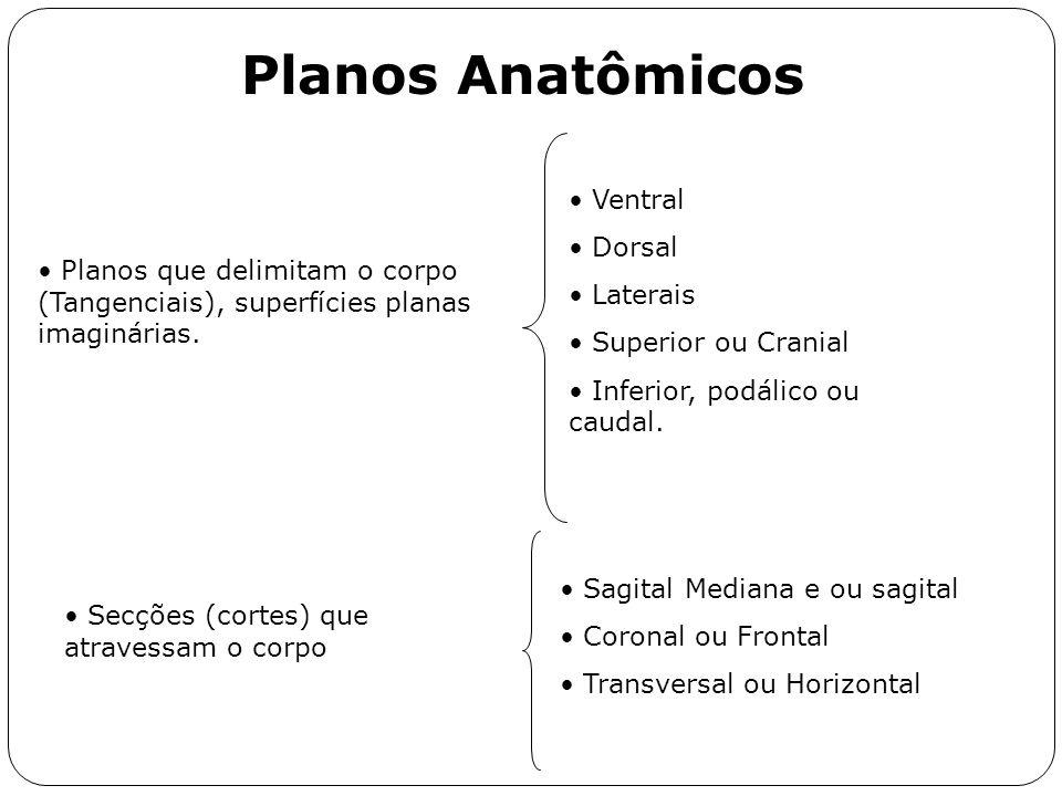 Planos Anatômicos Planos que delimitam o corpo (Tangenciais), superfícies planas imaginárias. Ventral Dorsal Laterais Superior ou Cranial Inferior, po