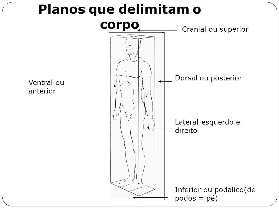 Planos que delimitam o corpo Ventral ou anterior Dorsal ou posterior Cranial ou superior Inferior ou podálico(de podos = pé) Lateral esquerdo e direit