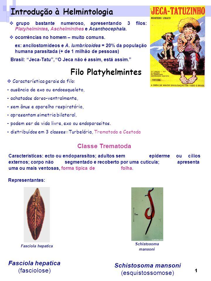 1 Introdução à Helmintologia grupo bastante numeroso, apresentando 3 filos: Platyhelmintes, Aschelminthes e Acanthocephala. ocorrências no homem – mui