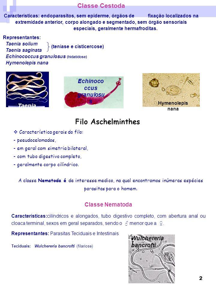 2 Classe Cestoda Características: endoparasitos, sem epiderme, órgãos de fixação localizados na extremidade anterior, corpo alongado e segmentado, sem