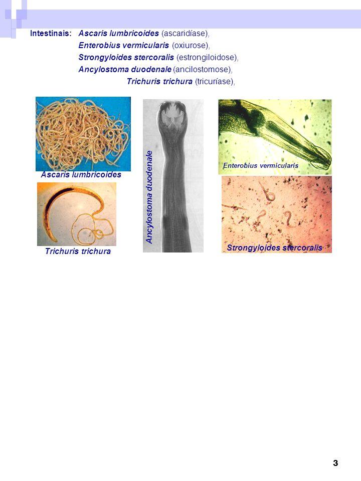 3 Intestinais:Ascaris lumbricoides (ascaridíase), Enterobius vermicularis (oxiurose), Strongyloides stercoralis (estrongiloidose), Ancylostoma duodena