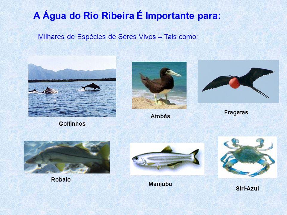 A Água do Rio Ribeira É Importante para: Comunidades Remanescentes de Quilombos Existem Mais de 50 Comunidades Quilombolas na Região que Dependem das Águas Livres do Rio Ribeira Quilombolas Reflorestando Mata Ciliar