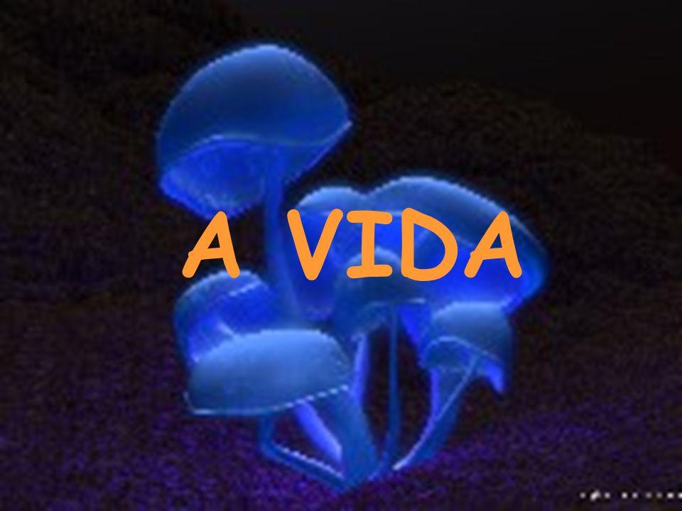 A VIDA