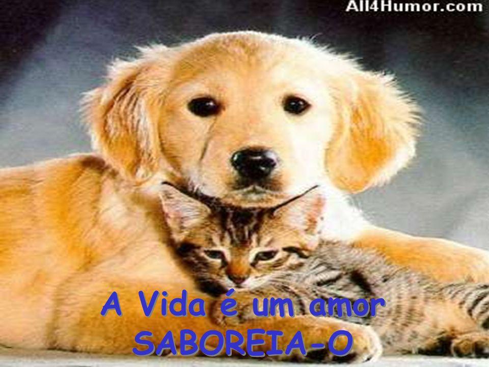 A Vida é um amor SABOREIA-O