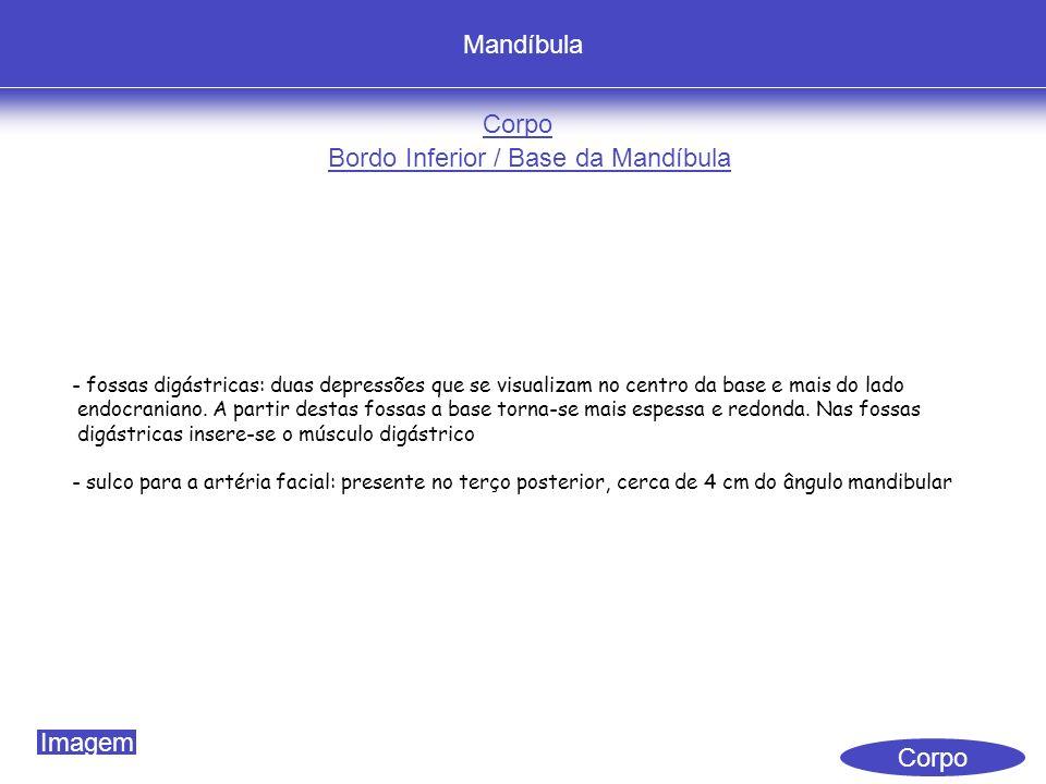 Mandíbula Corpo Bordo Inferior / Base da Mandíbula - fossas digástricas: duas depressões que se visualizam no centro da base e mais do lado endocraniano.