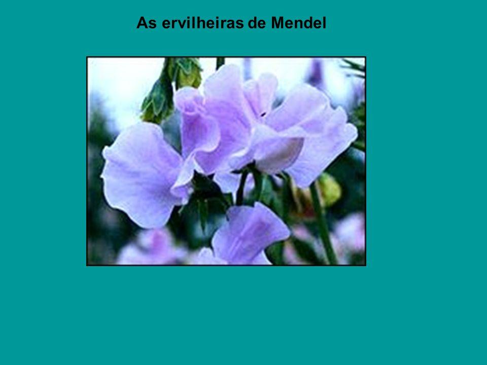 As ervilheiras de Mendel