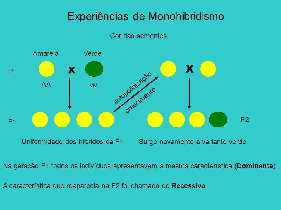 Cor das sementes P Experiências de Monohibridismo X F1 AmarelaVerde AAaa X c r e s c i m e n t o a u t o p o l i n i z a ç ã o F2 Uniformidade dos híb