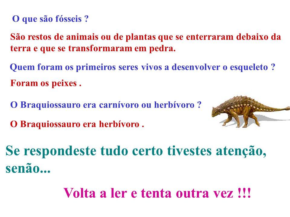 ESPERO QUE TENHAM APRENDIDO ALGUMAS COISAS PORQUE NO PRÓXIMO DIAPOSITIVO VÊM UMAS PERGUNTINHAS ! ! !