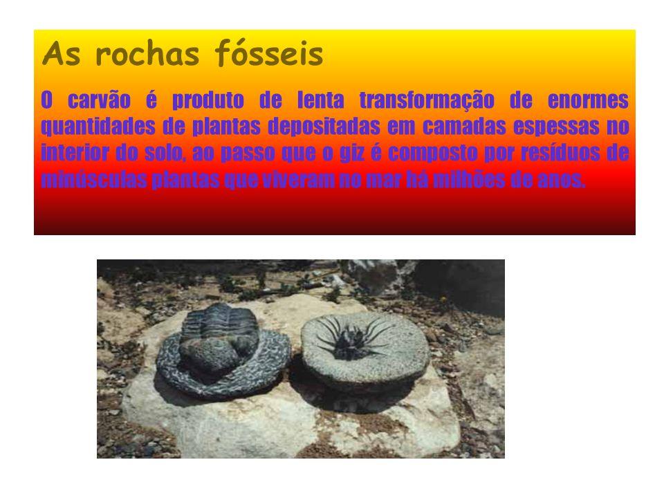 O que é um fóssil Quase tudo o que sabemos acerca das primeiras idades da Terra vem dos estudos dos fósseis. Os fósseis são restos de animais ou de pl