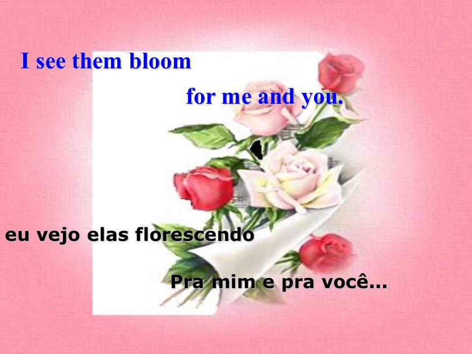 I see them bloom eu vejo elas florescendo for me and you. Pra mim e pra você...
