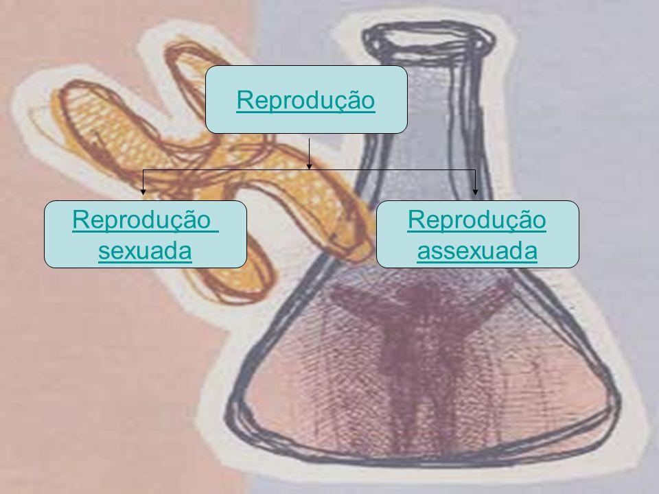 Reprodução sexuada Reprodução assexuada