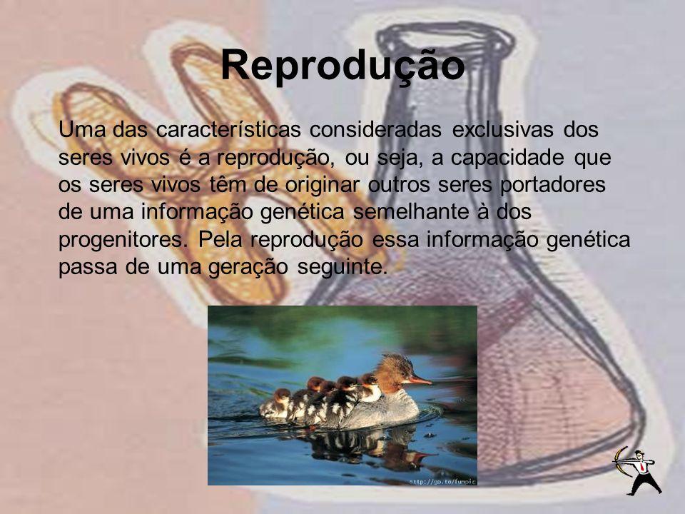 Reprodução Uma das características consideradas exclusivas dos seres vivos é a reprodução, ou seja, a capacidade que os seres vivos têm de originar ou