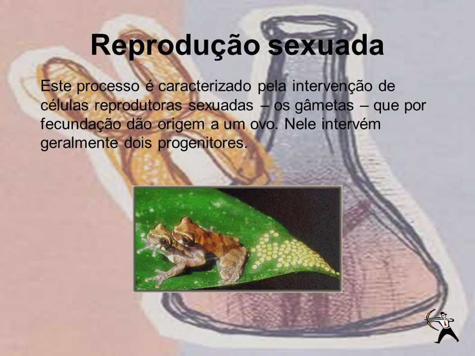 Reprodução sexuada Este processo é caracterizado pela intervenção de células reprodutoras sexuadas – os gâmetas – que por fecundação dão origem a um o