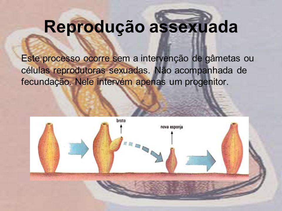 Reprodução assexuada Este processo ocorre sem a intervenção de gâmetas ou células reprodutoras sexuadas. Não acompanhada de fecundação. Nele intervém