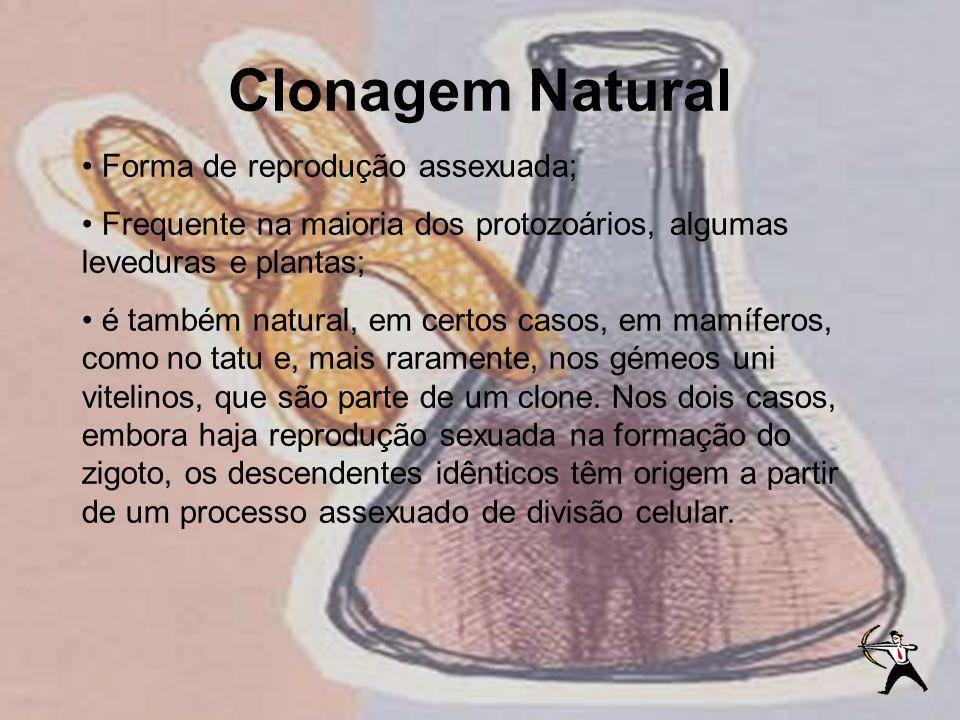 Clonagem Natural Forma de reprodução assexuada; Frequente na maioria dos protozoários, algumas leveduras e plantas; é também natural, em certos casos,