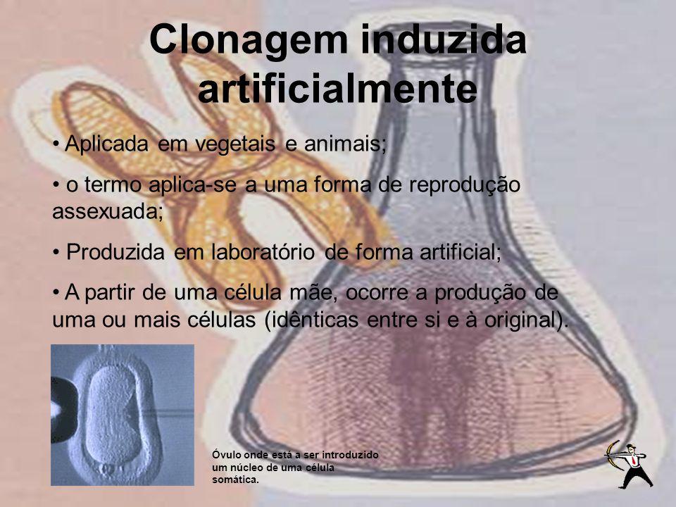 Clonagem induzida artificialmente Aplicada em vegetais e animais; o termo aplica-se a uma forma de reprodução assexuada; Produzida em laboratório de f