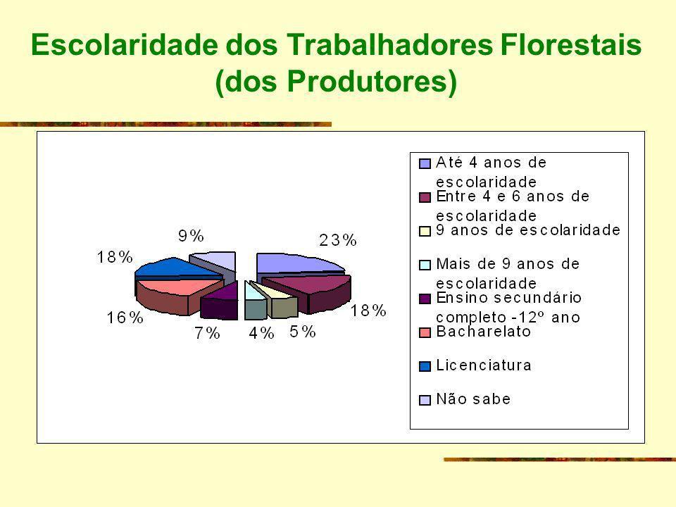 Escolaridade dos Trabalhadores Florestais (dos Produtores)