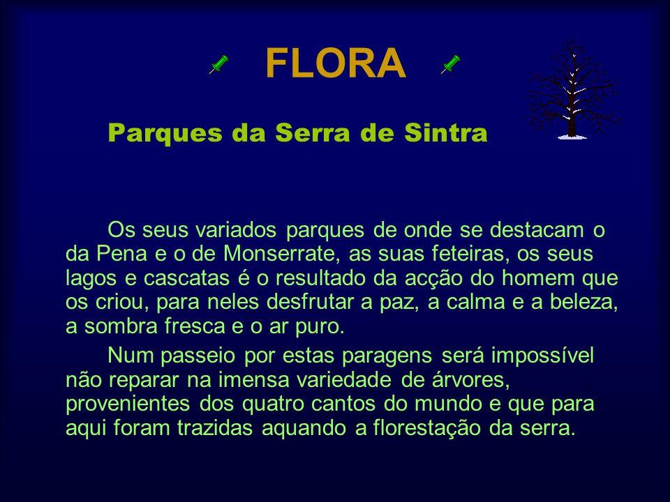 FLORA Parques da Serra de Sintra Os seus variados parques de onde se destacam o da Pena e o de Monserrate, as suas feteiras, os seus lagos e cascatas