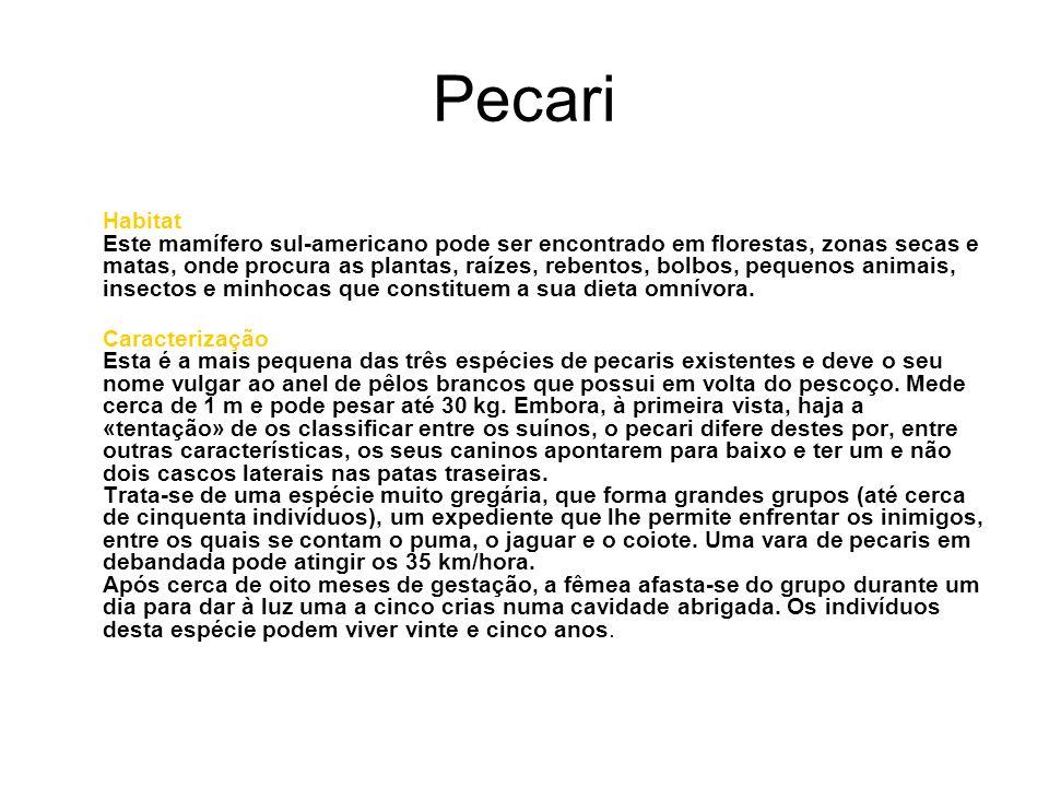 Curiosidades Pensa-se que «pecari» seja uma palavra tupi que significa «muitos trilhos pela floresta».