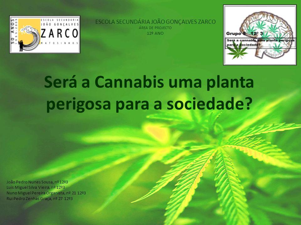 ESCOLA SECUNDÁRIA JOÃO GONÇALVES ZARCO ÁREA DE PROJECTO 12º ANO Será a Cannabis uma planta perigosa para a sociedade? João Pedro Nunes Sousa, nº 12º3