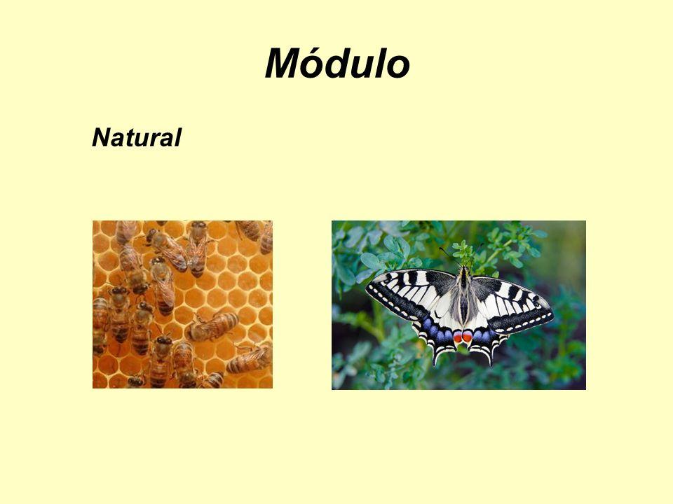 Módulo Natural