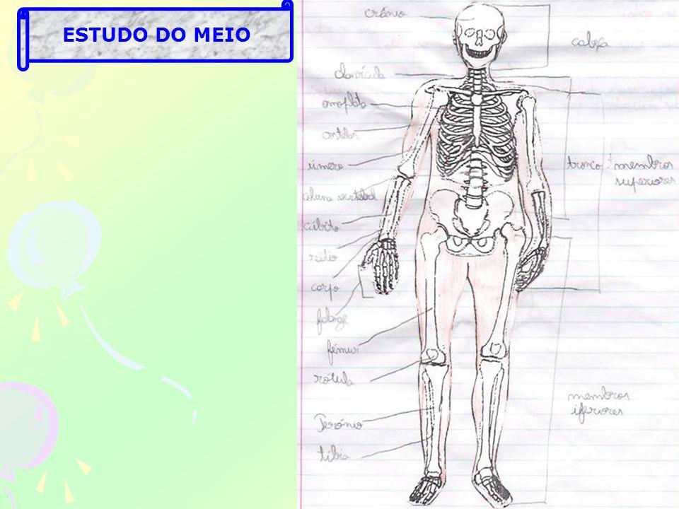 ESTUDO DO MEIO