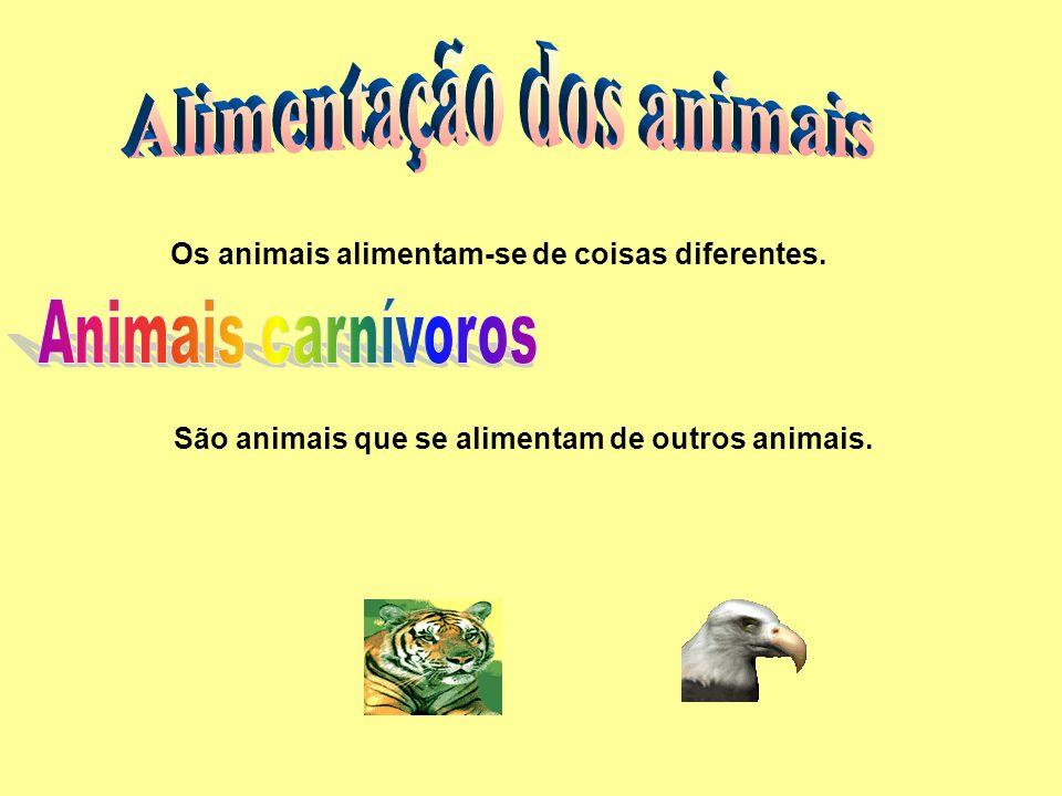 Os animais alimentam-se de coisas diferentes. São animais que se alimentam de outros animais.