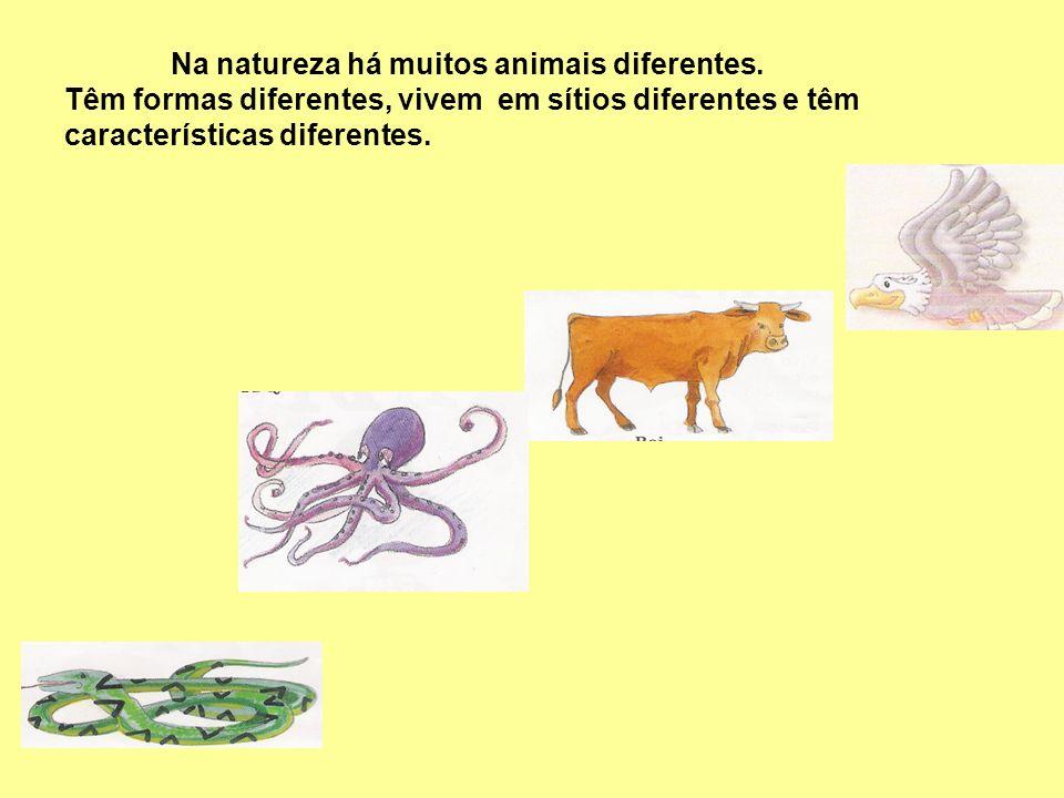 Na natureza há muitos animais diferentes. Têm formas diferentes, vivem em sítios diferentes e têm características diferentes.