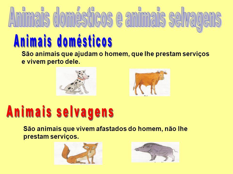 São animais que ajudam o homem, que lhe prestam serviços e vivem perto dele. São animais que vivem afastados do homem, não lhe prestam serviços.