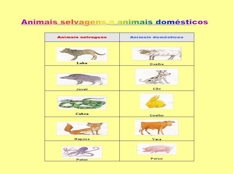 Os animais vivem em lugares diferentes.Alguns vivem na terra, outros vivem na água.