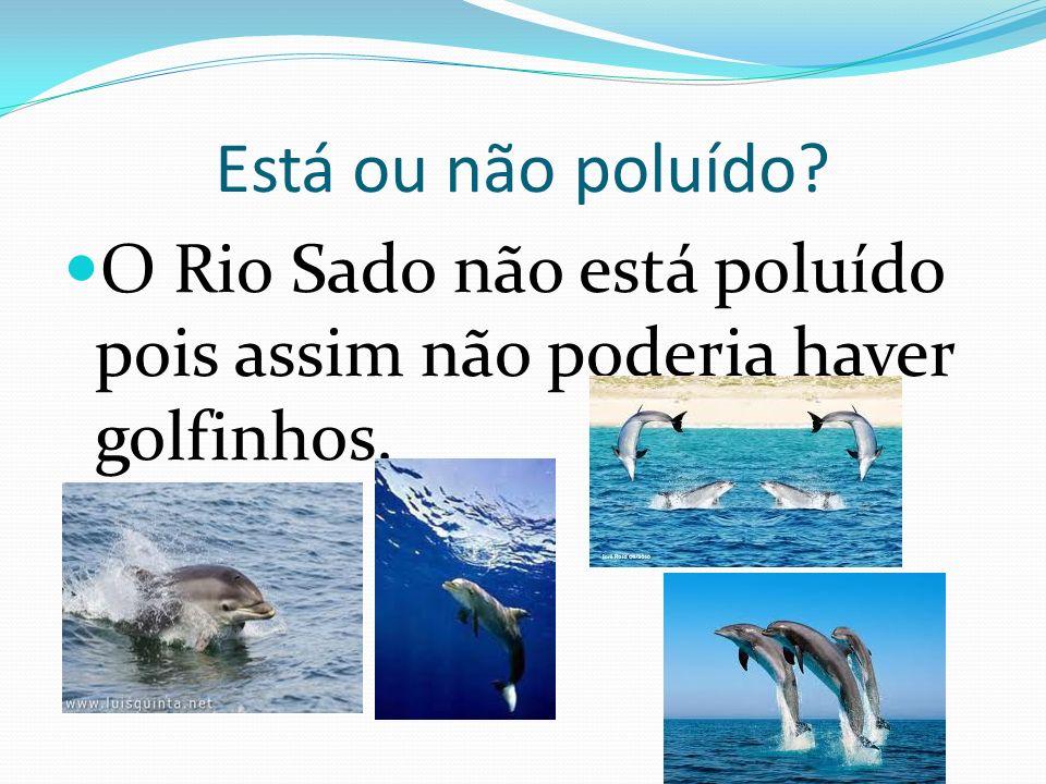 Como é o seu caudal? «O Rio Sado não tem grande caudal devido a vários fatores, destacando-se dois: o clima mais árido do Alentejo, onde se encontra a