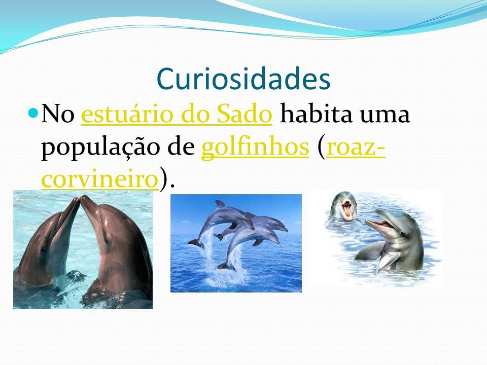 Está ou não poluído? O Rio Sado não está poluído pois assim não poderia haver golfinhos.
