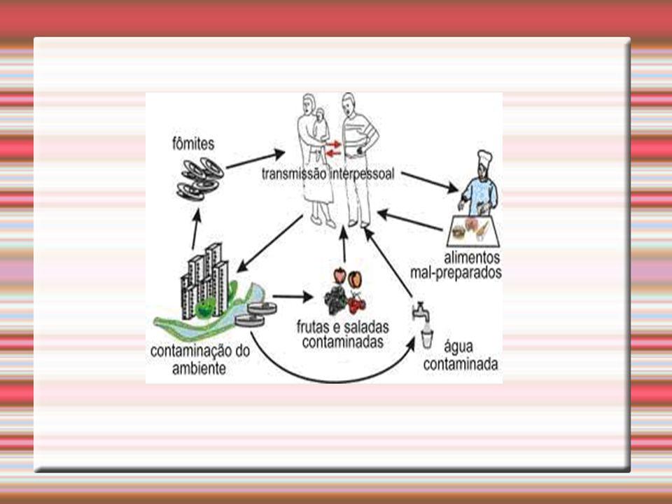 Como se transmite ? O contágio ocorre pela ingestão de água ou de alimentos contaminados, sexo, fezes, saliva e más condições de higiene. A incidência
