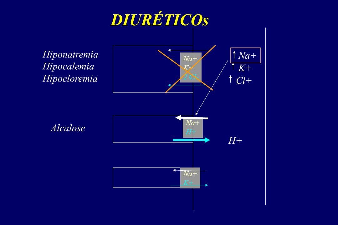DIURÉTICOs Na+ K+ 2 Cl- Na+ H+ Na+ K+ Na+ K+ Cl+ Hiponatremia Hipocalemia Hipocloremia H+ Alcalose