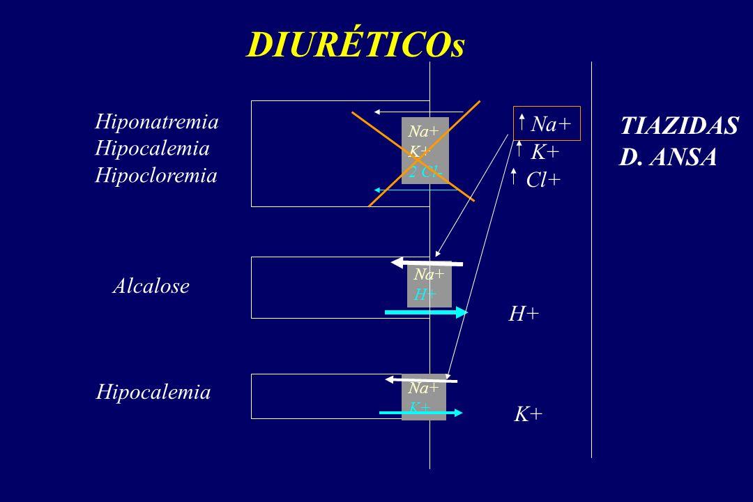 DIURÉTICOs Na+ K+ 2 Cl- Na+ H+ Na+ K+ Na+ K+ Cl+ Hiponatremia Hipocalemia Hipocloremia H+ Alcalose K+ Hipocalemia TIAZIDAS D.