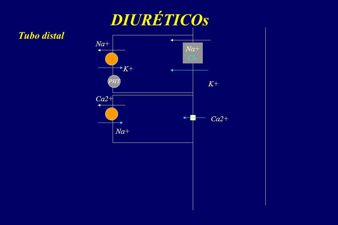 DIURÉTICOs Na+ Cl- Na+ K+ Ca2+ Tubo distal Ca2+ Na+ PHT