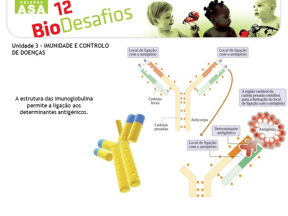A estrutura das imunoglobulina permite a ligação aos determinantes antigénicos.