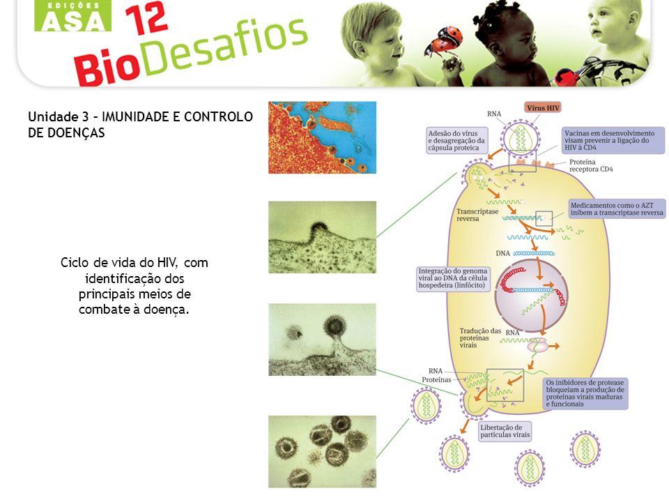 Ciclo de vida do HIV, com identificação dos principais meios de combate à doença.