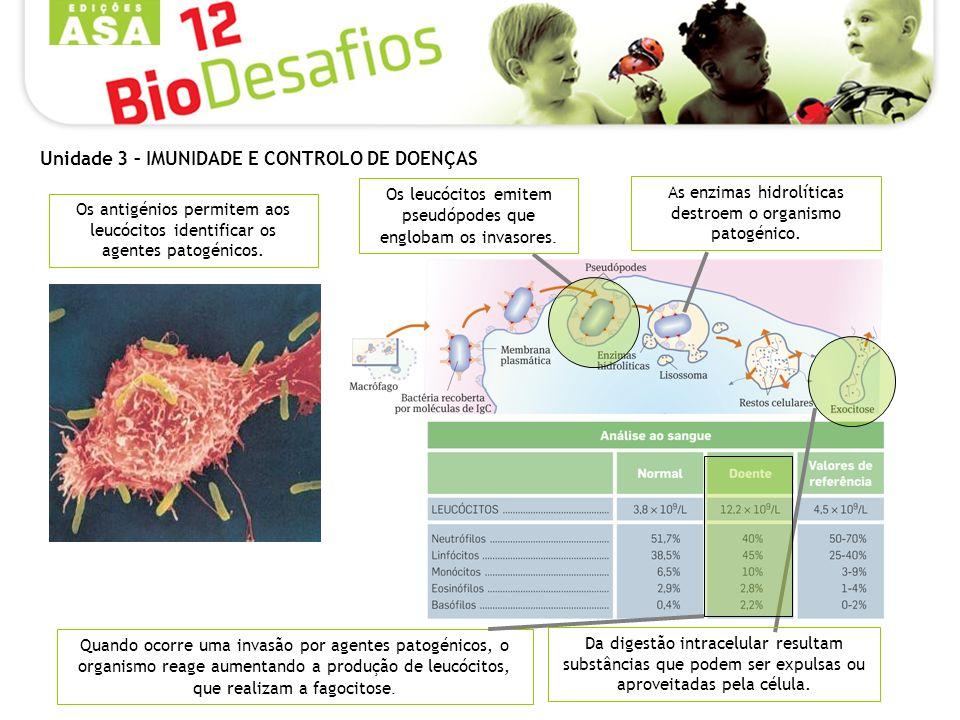 As enzimas hidrolíticas destroem o organismo patogénico.