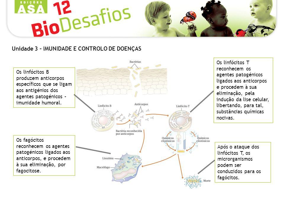 Os fagócitos reconhecem os agentes patogénicos ligados aos anticorpos, e procedem à sua eliminação, por fagocitose.