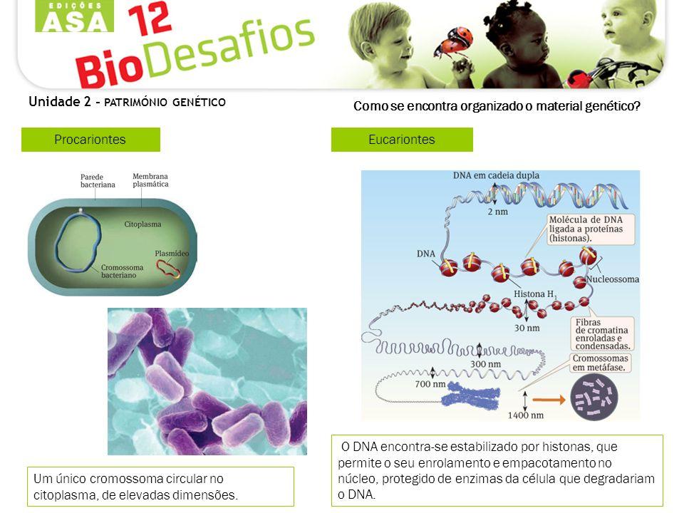 Como se encontra organizado o material genético? Procariontes Um único cromossoma circular no citoplasma, de elevadas dimensões. Unidade 2 - PATRIMÓNI
