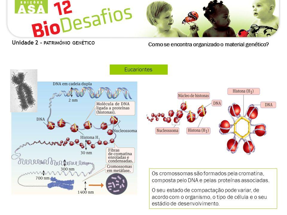 Eucariontes Os cromossomas são formados pela cromatina, composta pelo DNA e pelas proteínas associadas. O seu estado de compactação pode variar, de ac