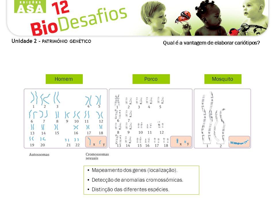 Qual é a vantagem de elaborar cariótipos? Mapeamento dos genes (localização). Detecção de anomalias cromossómicas. Distinção das diferentes espécies.