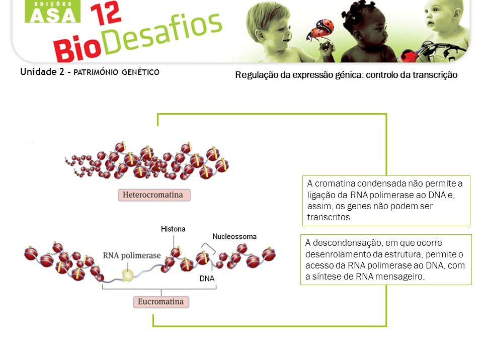 Regulação da expressão génica: controlo da transcrição A cromatina condensada não permite a ligação da RNA polimerase ao DNA e, assim, os genes não po